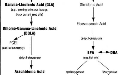 Benefits of Omega 3 Fatty Acids/Essential Fatty Acids